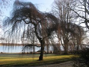 2 Ringsjön (26)