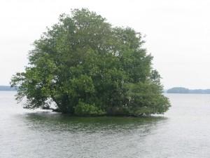 Groser Plönen See (8)